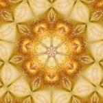 Paradieskarte-04-Rhododendron-Front