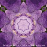 07-Dia-Glockenblume
