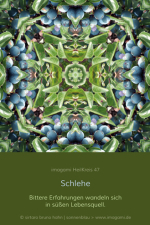 HeilKreis-fbg0047