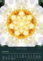 12-imagami-Kalender-2020
