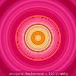 13-Heckenrose-720er